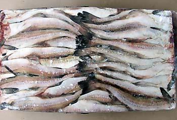 В Новосибирск не пустили 350 тонн мороженой рыбы