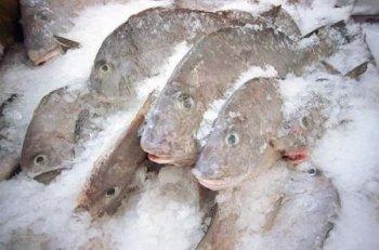 Freshfrozen, frozen fish and seafood