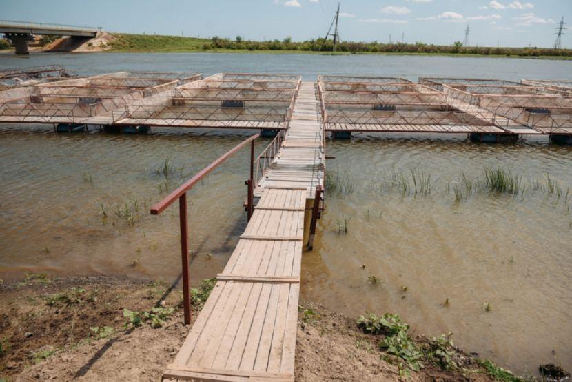 Губернатор Астраханской области Александр Жилкин посетил несколько хозяйств Икрянинского района, занимающихся выращиванием рыбы осетровых видов, и предприятий по рыбопереработке.