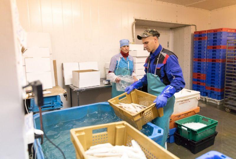 Заместитель Губернатора Псковской области Сергей Перников в четверг, 20 июля, в рамках рабочей поездки в Гдовский район посетил предприятия по добыче и переработке рыбы — ЗАО «Гдовский рыбозавод» и ООО «Грико».