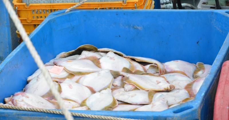 ООО «Тихоокеанская рыбопромышленная компания» начало поставку в Магадан охлажденной рыбы из прибрежной зоны