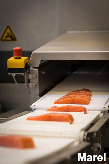 Компания Marel продемонстрировала свое оборудование и программные решения, способствующие оптимальной переработке сырья, уменьшению времени обработки, снижению трудозатрат, а также повышению качества процессов, входящих в цепочку создания стоимости при переработке рыбы. В рамках выставки также выступили эксперты компании.