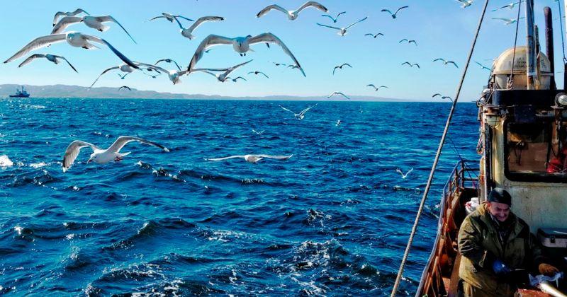 Российские рыбопромышленники, по данным отраслевой системы мониторинга, к 31 октября 2018 года освоили 4,35 млн тонн, что на 6,5% больше уровня прошлого года.