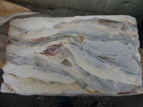 Рыбная биржа. Рыбная биржа Владивосток. Владивостокская рыбная биржа. Аукционы ВБР. Рыбные аукционы. Рыба во Владивостоке. Цена на рыбу. Дешевая рыба. Купить рыбу во Владивостоке. Оптовая покупка рыбы. Оптовая продажа рыбы. Купить рыбу на аукционе. Сайт по продаже рыбы. ДВРБ. ДАРТ. Дальневосточный аукционный рыбный дом. Лелюхин Сергей Егорович. Купить консервы. Купить рыбопродукцию. Продать консервы. Продать рыбопродукцию. Навага. Навага неразделанная. Замороженная Навага. Купить дешевую Навагу. Купить Навагу.