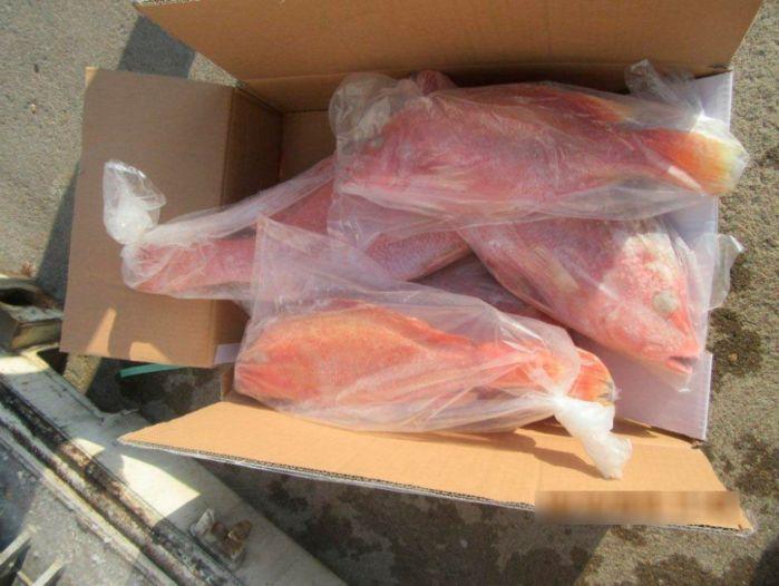 В морском порту Санкт-Петербурга специалисты территориального Управления Россельхознадзора приостановили ввоз 18 тонн рыбы из Индонезии. Свежемороженые рыба-император, сниппер, барамунди и стейки тунца прибыли на теплоходе «Нордик Гамбург» в адрес одного из петербургских ритейлеров.