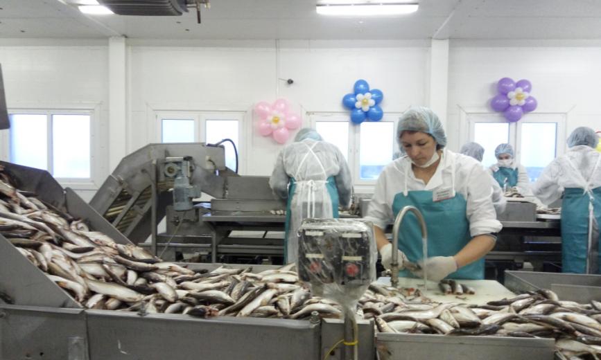 С начала года в округе добыто 8 700 тонн рыбы. До выполнения годового плана осталось всего 300 тонн, сообщает региональный департамент агропромышленного комплекса, торговли и продовольствия.