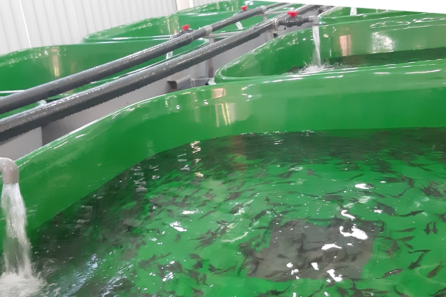 Главрыбвод завершил первый этап реконструкции Белоярского рыбоводного завода