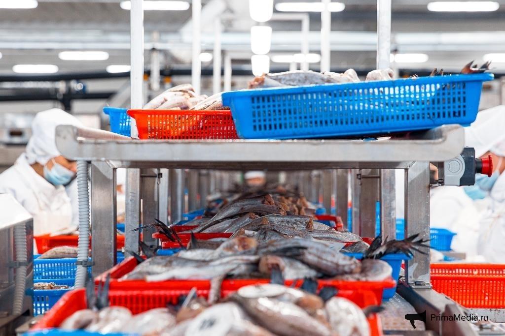 Рыбная продукция для Приморья и всей России. Фото: Аверьянов Илья, ИА PrimaMedia