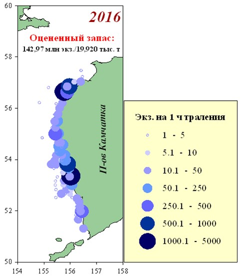 Рисунок 1 — Распределение уловов корюшки азиатской зубастой в шельфовой зоне Западной Камчатки по данным учетных донных траловых съемок в 2016 г.