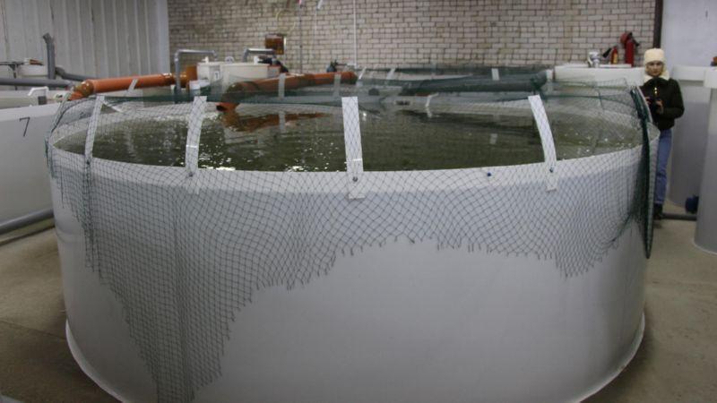 Резервуар для разведения рыбы